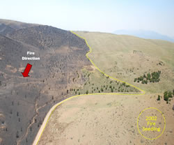 Aerial view of the Black Mountain Fire burn area stopped at the 2002 seeding area.