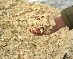 Picture of a hand holding woodchips in the foreground, a pile of woodchips in the background.